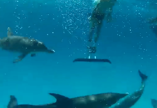 Dolphins Go Crazy for a Guy in a Monofin