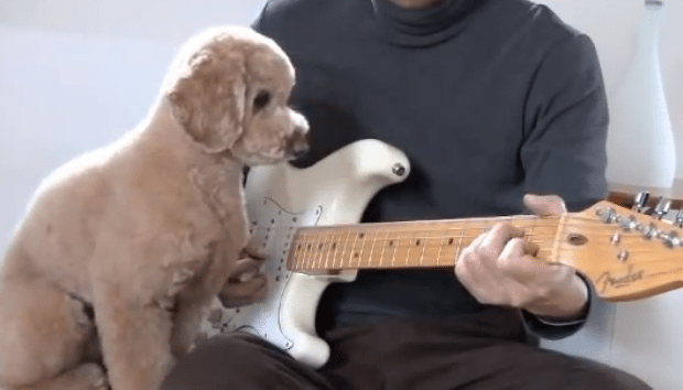 Meet Mocha, The Guitar Playing Doodle!