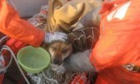 Miracle Dog Rescued From Floating Debris In Japan After 3 Weeks At Sea.