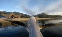 GoPro Attached To Pelican and It's Amazing