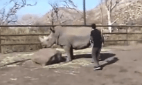 Crazy Fucking Kid Rides a Rhino