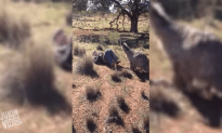 Emu Tries To Get It On With A Dude