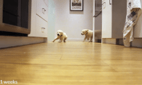 Time Lapse Video Of Pups Running To Dinner