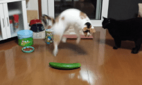 Cats That Are Scared Of Cucumbers