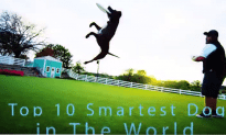 10 Smartest Dogs in The World!