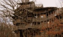 So You Say You Wanna Live In A Tree House…