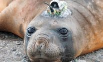 Scientists Use Seals to Chart the Ocean Floor