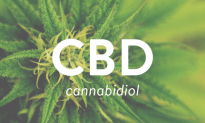 The WHO Releases Report : No Public Health Risks Or Abuse Potential For CBD