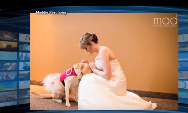Service Dog Walks Bride to the Alter