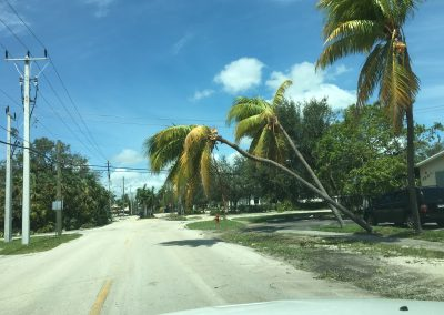 palm trees down by irma