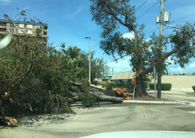 tree snapped by irma