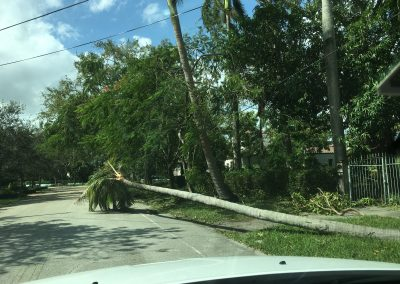 palm trees down from irma