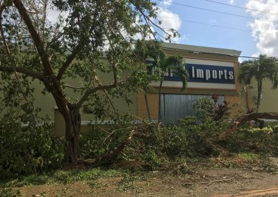 tree fell on pier one imports during irma