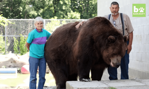 OMG! Family Lives With Giant Bears