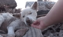 Defeated Stray Dog Rescued by Cool Human