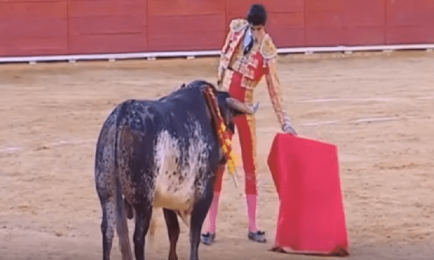 Bull Fighter Gored To Death During Live Spanish Braodcast