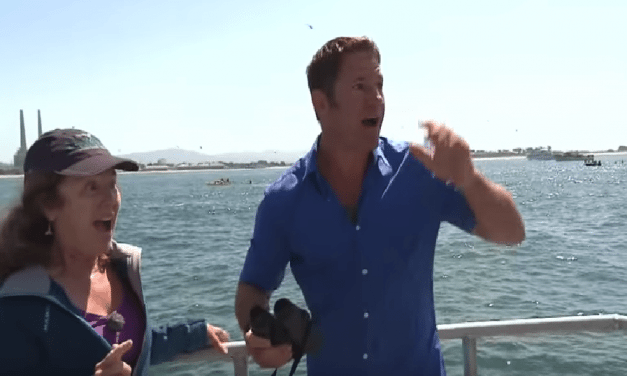 Reporter Gets Super Excited After Spotting A Blue Whale During Live News Broadcast