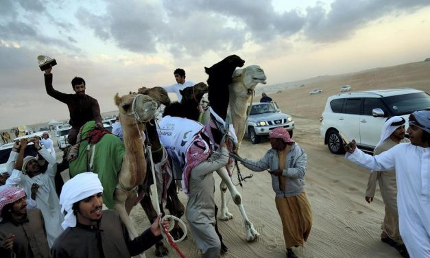 Introducing Batoola: The Champion Camel of the Emirates