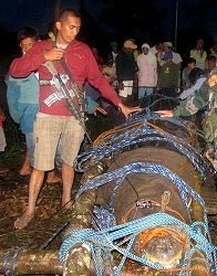 Biggest Salt Water Crocodile Ever, Captured In Philippines, May Become Reality Star