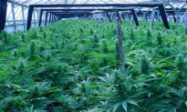 Welcome to Oakland: Home of the Biggest Weed Farms in the U.S.