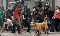The Legend Of The Riot Dog