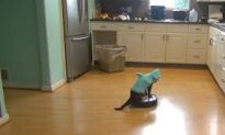 Cat Wearing a Shark Costume Cleans the Kitchen